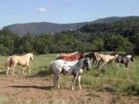 Ecole equitation enfants et adultes