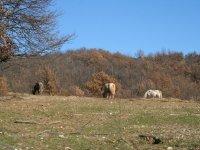 Equitation naturelle dans le Gard