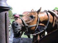 Equitation de pleine nature dans le Gard