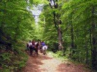 Tourisme equestre dans le Gard