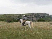cheval sur le Causse mejean a Pauparelle