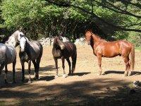 Balades et cours d equitation dans le 48