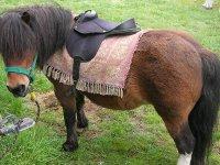 Petit poney pour les enfants cavaliers