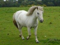 Un des poneys du centre