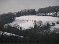 les poneys sous la neige