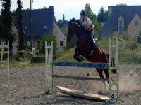 Cours d equitation