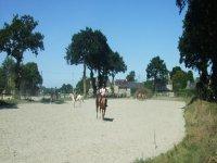 Cours particulier d equitation