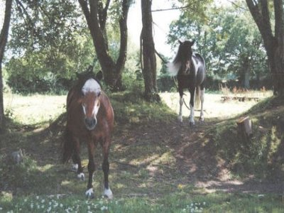Argoat Équitation