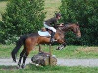 Apprentissage equestre