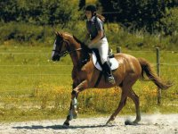 Equitation domaine Grands Fosses