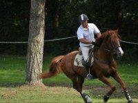 Faire du cheval dans le 22