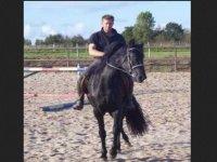 Nicolas le dirigeant du centre equestre