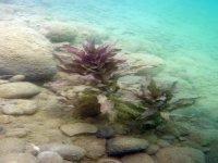 Faune et flore aquatique