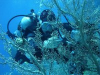 Connaissez le monde sous marin avec VPP.JPG
