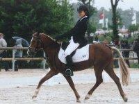 Equitation et concours dans l Oise
