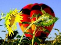Ballon et nature