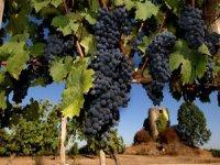 Decouverte des vignes