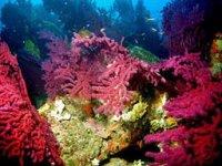 Corail sous marin