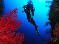 Plongee sous marine tout niveau en Corse