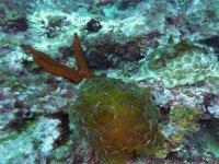 Laissez vous surprendre par les mystère sous marins