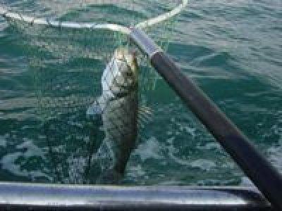 Albatre Plaisance Pêche