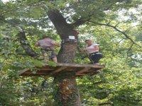 Le fabuleux monde des arbres