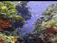 D�couverte de flore sous-marine