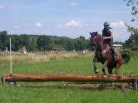 Centre equestre et poney club