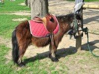 Parcours a poney