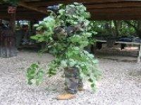 Camouflage Arbre
