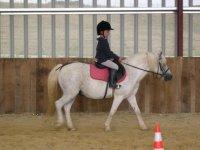 Les poneys pour les enfants