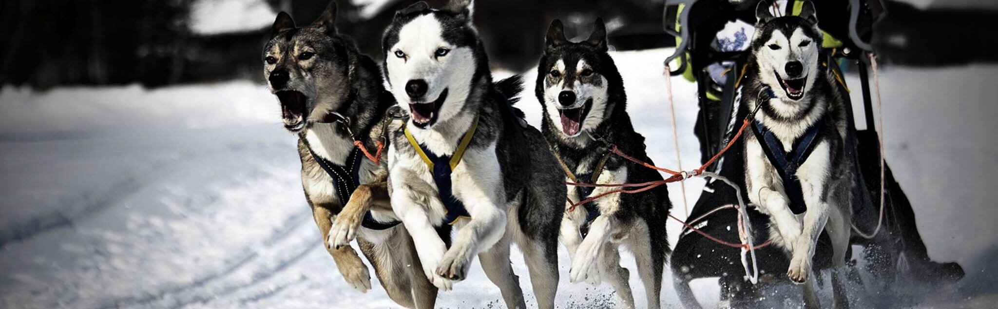 Mushing dans France
