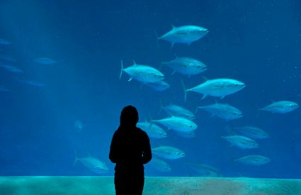 Aquariums dans France