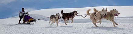 Groupe de Mushing