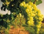 Circuit des Vignobles de Saint Paul de Loubressac