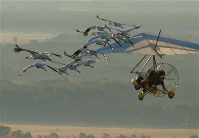 Deltaplane avec les oiseaux