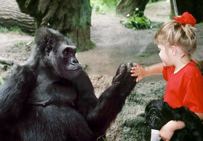 Parc animalier et enfants