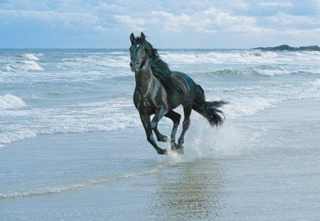 Cheval noir au galop sur la plage