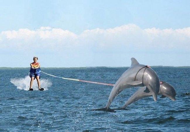 Ski nautique avec les dauphins
